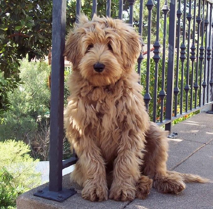 100_0206_Salisbury_boy_puppy